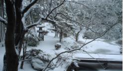 啄木亭中庭冬1